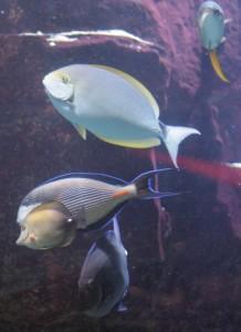 Caesars Palace Aquarium