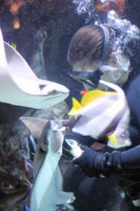 Caesars Palace Aquarium Feeding