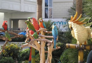 Flamingo Macaws - On The Strip