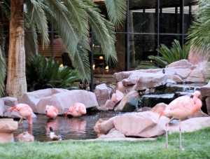 The Flamingo's  Flamingos