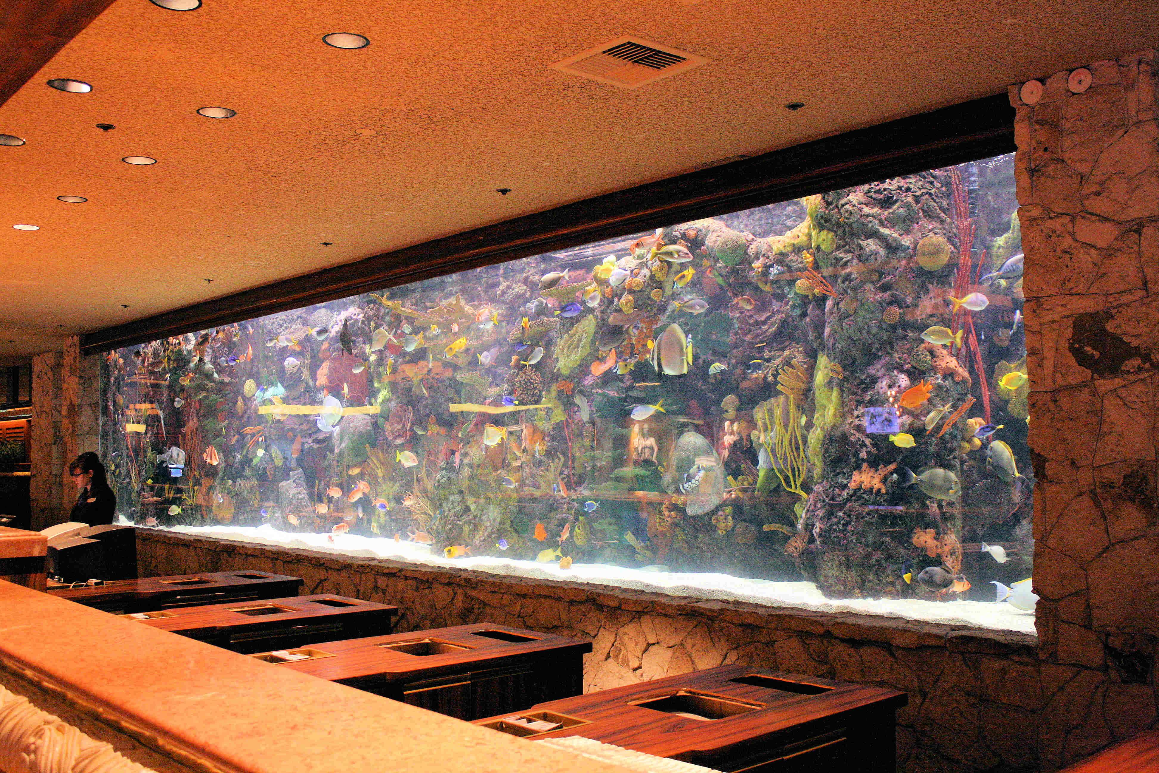 caesars palace aquarium vegas mavens