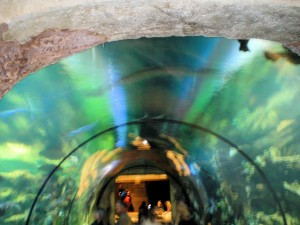 Tunnel at Shark Reef