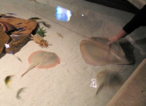 Shark Reef Hands-On Exhibit