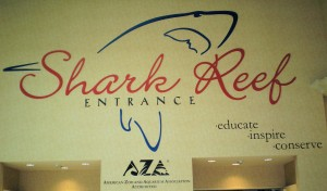 Mandalay Bay Shark Reef Sign